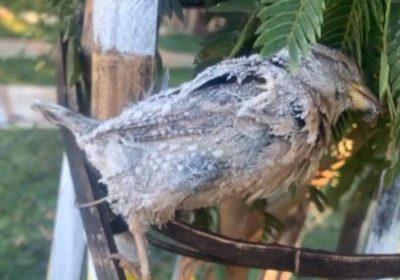 Pássaro fica congelado após noite fria em Petrópolis