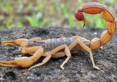 Criança de três anos morre após ser picada por escorpião em MG