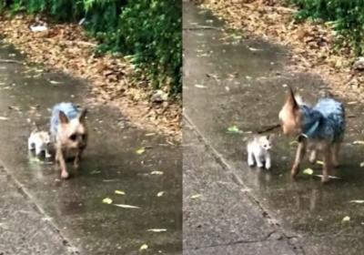 Cachorrinho resgata gatinho abandonado na chuva e o leva para casa